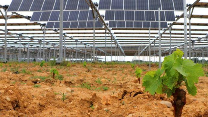 Les panneaux changent automatiquement d'orientation pour assurer le bien-être de la culture et prioriser la récolte. (©Sun'R)