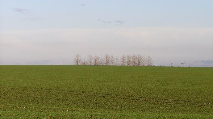 Les hausses des surfaces en blé tendre et escourgeon s'expliquent en partie par la sécheresse et la substitution du colza par ces deux cultures. (©TNC)