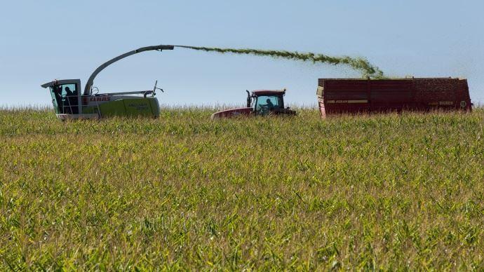 Selon Arvalis: «Choisir une précocité adaptée à son contexte et valoriser le progrès génétique sont les deux axes prioritaires pour le choix d'une variété de maïs» (©Watier-visuel)