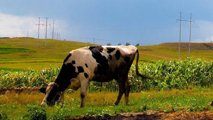 Suite au recensement agricole mené en 2016, les chiffres des productions animales chinoises de ces 10 dernières années ont été revus à la baisse. (©pixabay)