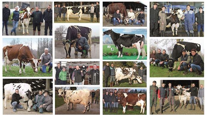 L'élection des meilleures vaches laitières Évolution vise à mettre en avant des animaux inconnus des concours et publications. Néanmoins, ce sont des animaux rentables qui font la réussite et la fierté de leurs éleveurs. (©Evolution XY)