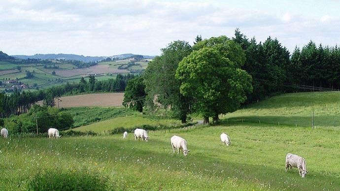 58% des fermes créées par Terre de liens depuis sa mise en place comportent un atelier d'élevage.(©TNC)