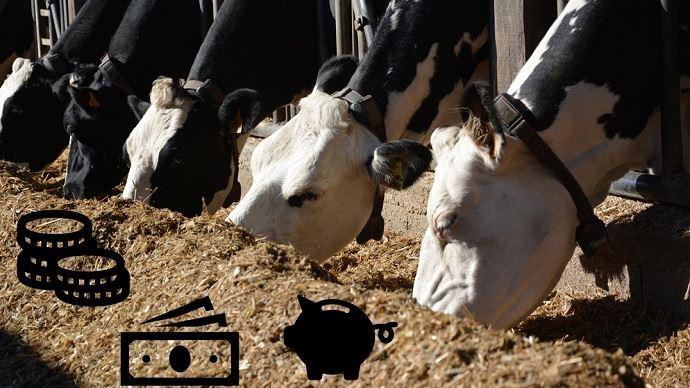Produire plus pour gagner plus: cette formule est-elle si vraie? Les chambres d'agriculture de Bretagne se sont penchées sur la question. (©TNC)