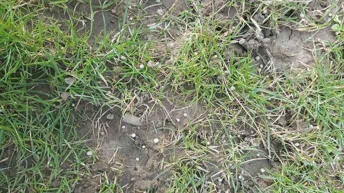 Effectuer son premier apport d'azote sur prairie de bonne heure vise à obtenir un pic de production le plus tôt possible. (©TNC)