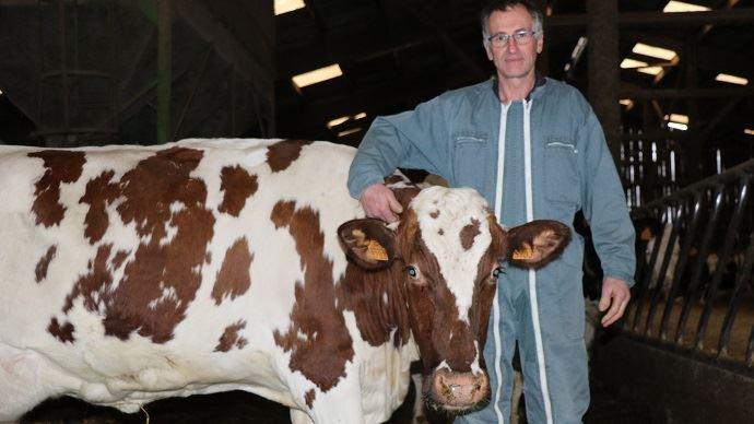 Hubert Dion pratique le croisement Procross depuis une dizaine d'années. Initié pour pallier les problèmes de fertilité sur ses Holsteins, le croisement prend aujourd'hui de l'ampleur dans son troupeau. (©TNC)