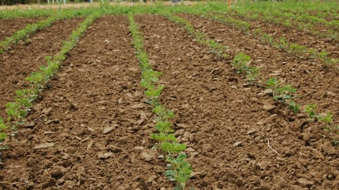 Les résultats complets des essais variétés de soja 2018 sont désormais disponibles. (©TNC)