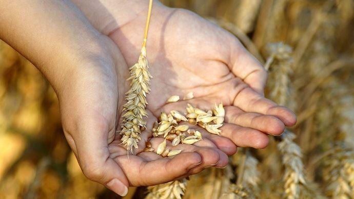 Différents leviers (privés et publics) doivent se cumuler pour gérer les risques en agriculture. (©Marzena P. Pixabay)