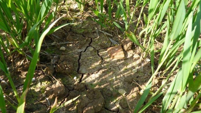 Le Nord a été placé en alerte sécheresse pour la troisième année consécutive. (©TNC)