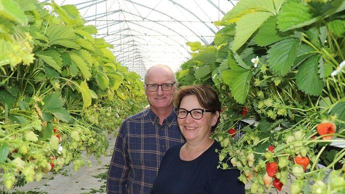 Pour diversifier leur exploitation typique du Pas-de-Calais, Christine et Jean-Louis Schrevere se sont lancés, il y a environ deux ans dans la production de fraises hors-sol. (©TNC)