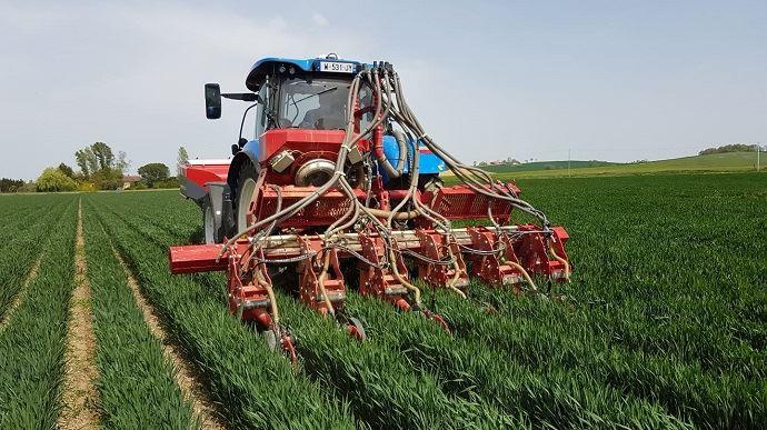 Semis du soja réalisé le 19 avril dernier dans un blé juste avant l'épiaison, avec un prototype de semoir permettant d'ajuster les écartements. (©Cyril Hamot)