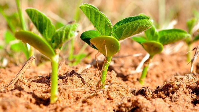 68% des surfaces métropolitaines de soja étaient irriguées en 2016.(©TNC)