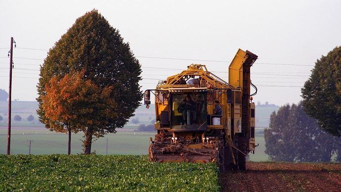 2300 planteurs sont concernés par la fermeture des deux sucreries Saint Louis Sucre en France. (©Pixabay)