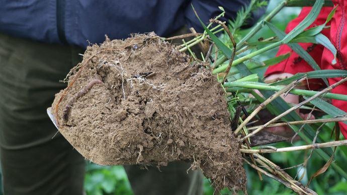 Quel que soit le type de travail de sol utilisé, «les couverts sont très importants pour la vie des sols», précise Samuel Lechat, agriculteur en Charente-Maritime. (©TNC)