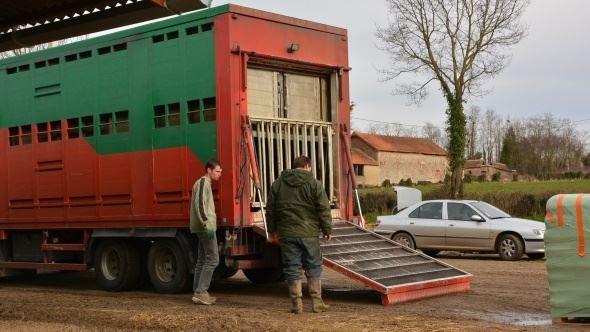 Un arrêté interdit le transport d'animaux pendant la canicule. (©TNC)
