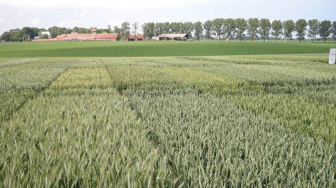 Arvalis-Institut du végétalpropose son outil interactif «Choix des variétés - blé tendre». (©TNC)