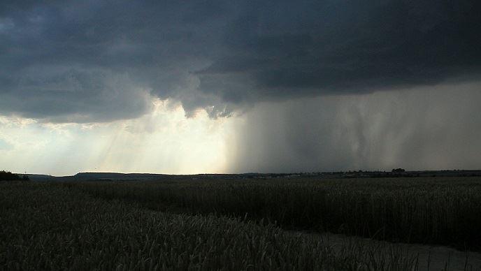 Selon Dewey Strickler, la saison pourrait être, pour le maïs, la plus incertaine depuis des années. (©Pixabay)