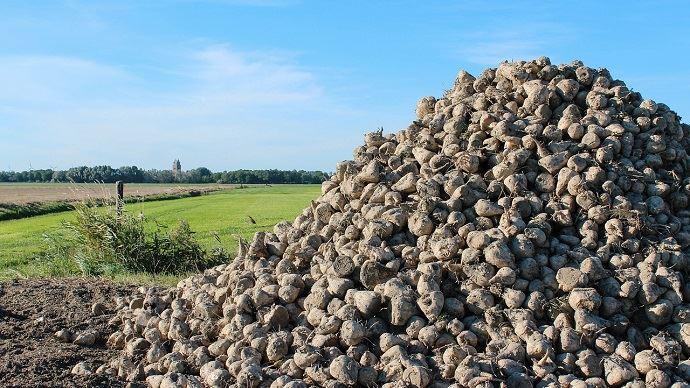 Les surfaces de betteraves restent «à un bon niveau» selon Tereos (- 5% par rapport à l'an dernier).(©Pixabay)