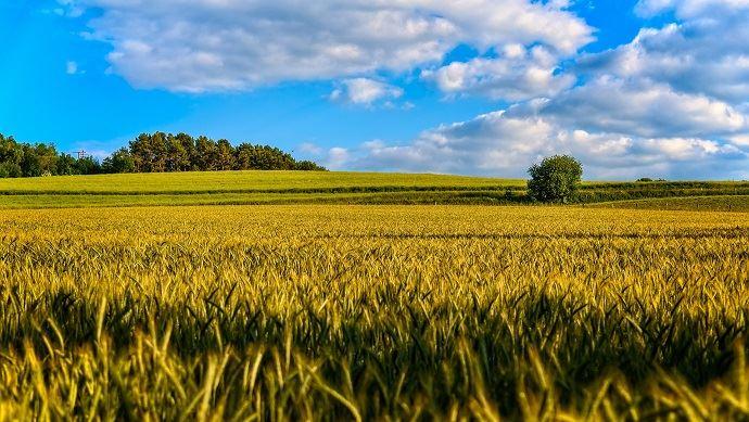 Retrouvez tous les prix du foncier agricole 2018 en Ile-de-France. (©Pixabay)