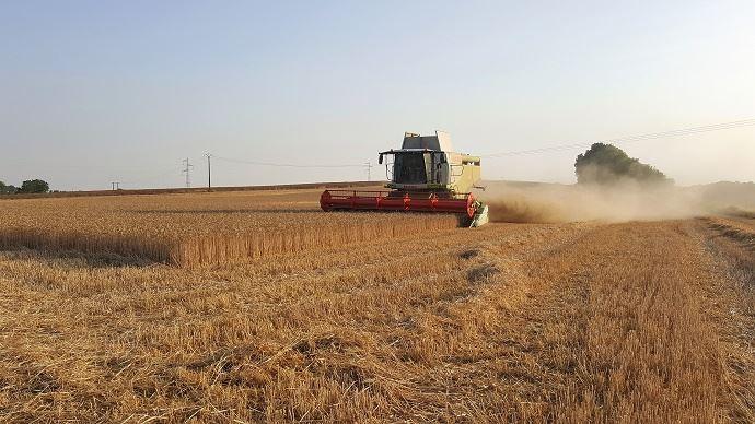 Un premier bilan de la moisson 2019: une année qui «restera dans les bons crus» pour le blé, selon François Berson, directeur collecte Soufflet Agriculture. (©TNC)