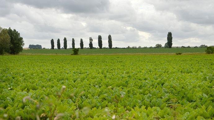 Retrouvez tous les prix 2018 du foncier agricole dans les Hauts-de-France.(©Pixabay)