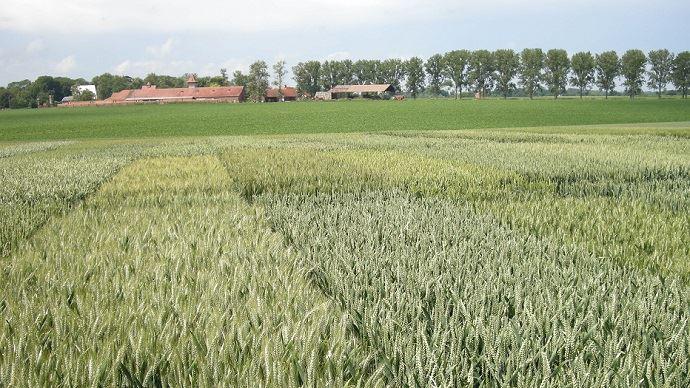 Les variétés résistantes aux maladies se révèlent un outil indispensable pour diminuer l'utilisation des produits phytosanitaires. (©TNC)