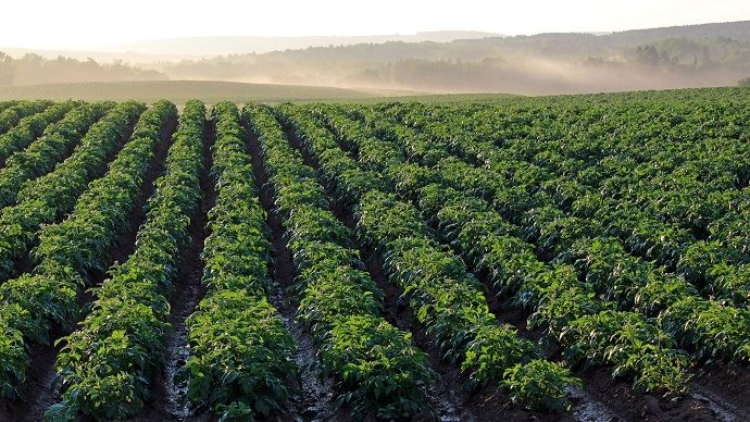 La production de pommes de terre de conservation est attendue par l'UNPT entre 6,2 et 6,7 Mt en 2019. (©Pixabay)