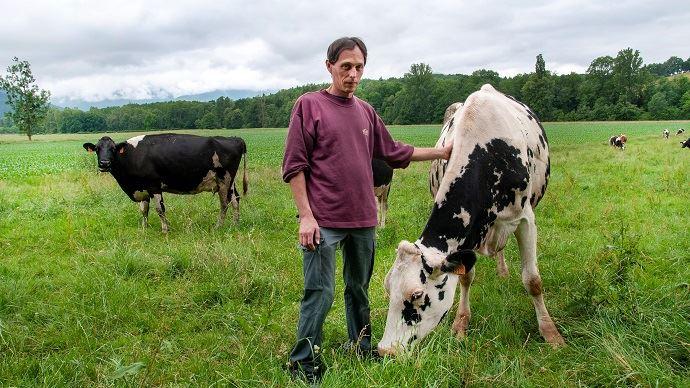 Ludovic Brunet passe beaucoup de temps à observer ses vaches. Cela l'aide à choisir le traitement adapté à chaque animal. (©Nicolas Mahey)