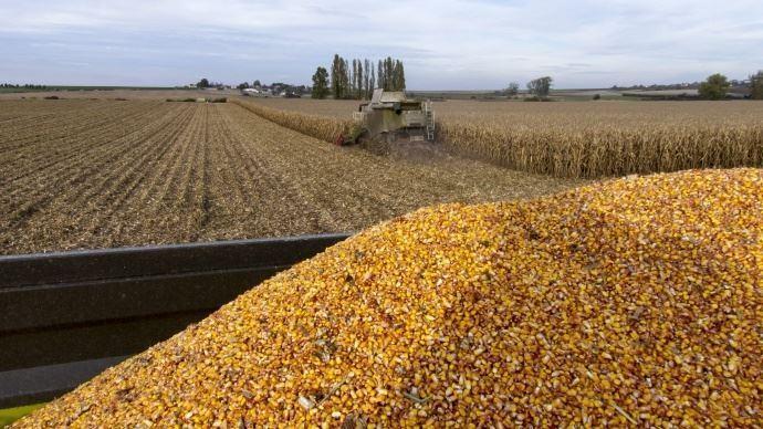 Cette année, le potentiel de rendement du maïs grain a été entamé par la sécheresse et les fortes chaleurs de l'été (©TNC)