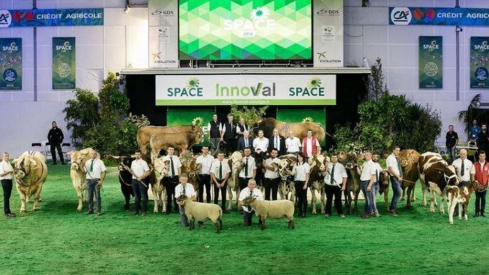750 animaux fouleront le ring du Space 2019, dont 550 bovins de 13 races différentes. (©Space)