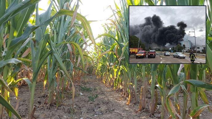Depuis l'incendie, jeudi 26 septembre, de l'usine Seveso Lubrizol à Rouen, les ensilages de maïs sont interdits par arrêté préfectoral dans 204 communes de Seine-Maritime, l'Oise, la Somme et l'Aisne. (©TNC)