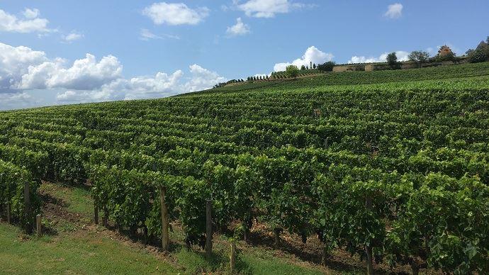 Philippe Ducourt, vigneron dans le Bordelais, qui exploite avec son fils 450 hectares dont 25ha sans glyphosate, estiment qu'il est impossible de se passer complètement de cet herbicide en raison «d'impasses techniques pour les grandes surfaces» agricoles.(©TNC)