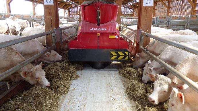 La finition des vaches de réforme du troupeau allaitant est étudiée à la ferme expérimentale des Bordes par Arvalis sur un troupeau de Charolaises. (©Arvalis-Institut du végétal)