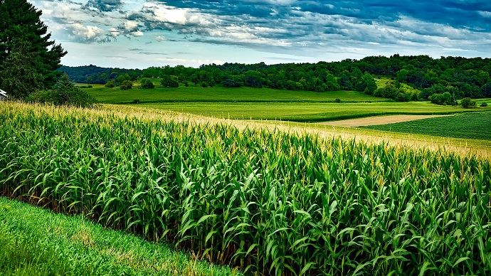 La guerre commerciale entre la Chine et les États-Unis impacte fortement le secteur agricole. (©Pixabay)