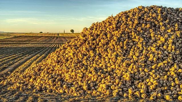 La fermeture de la sucrerie de Bourdon va impacter 350 emplois directs ou indirects (©Pixabay)