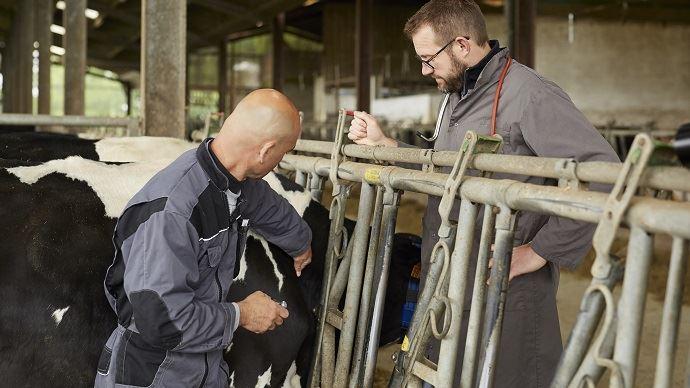 La solution injectable Multimin permet de supplémenter les bovins en oligo-éléments de façon rapide lors des périodes les plus critiques. (©Virbac)