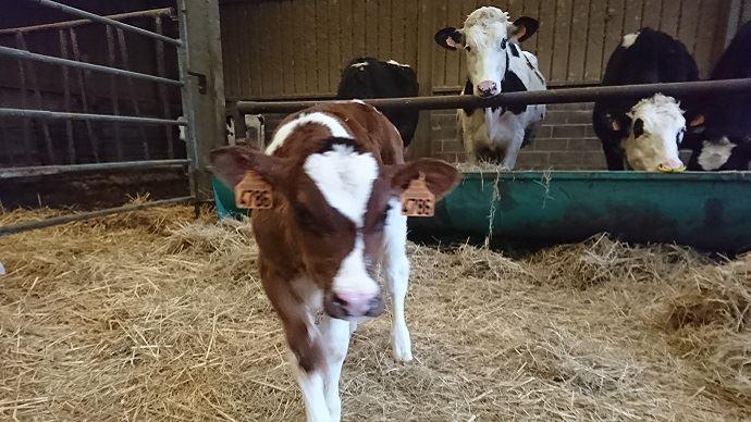 Le députés se mobilisent contre les intrusions dans les élevages. (©FarmerSeb)
