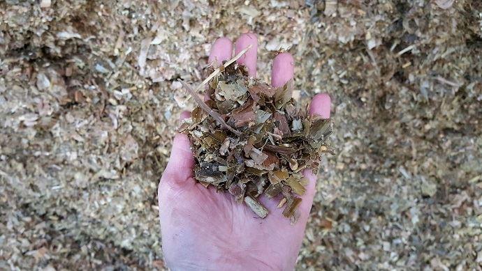 Digestibilité et amidon: l'analyse du maïs permettra de connaitre la qualité du fourrage pour caler la ration. (©TNC)