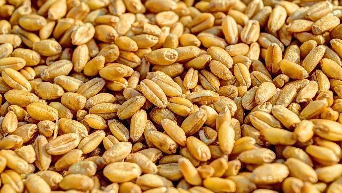 Une baisse de billet vert tend à faire monter le blé, libellé en dollars, qui devient mécaniquement moins cher pour les acheteurs munis d'autres devises. (©Pixabay)