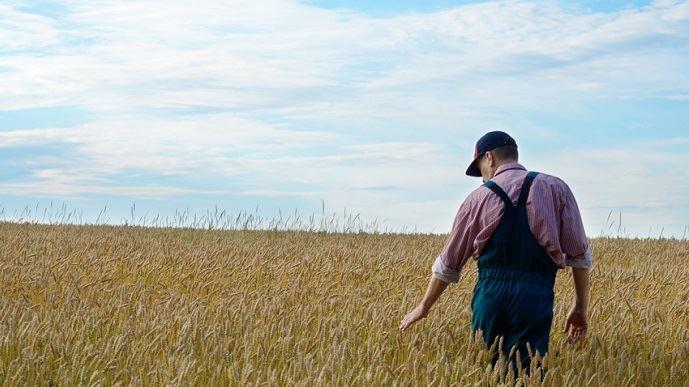 LaMSA fait état de 605 décès par suicide d'assurés du régime agricole.(©Olena Mykhaylova/Fotolia)