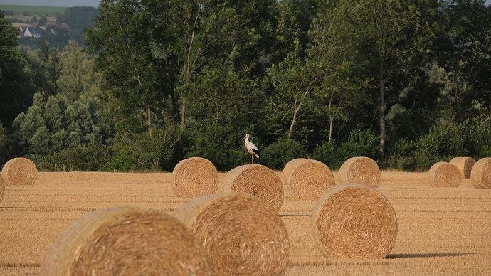 La politique agricole foncière est un atout en matière de compétitivité, juge Agriculture Stratégies (©rv59268)