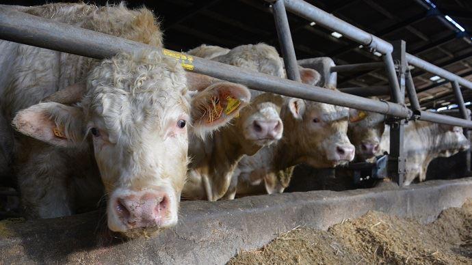 Vous avez un projet d'atelier de viande bovine? Decibov vous aide à chiffrer sa mise en place et ainsi vérifier sa faisabilité. (©TNC)