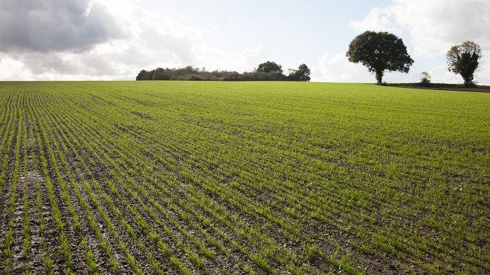 Les règles essentielles de l'implantation d'une prairie: chaleur, humidité, bon contact terre-graine, accès à la lumière. (©Gnis-Sébastien Champion)