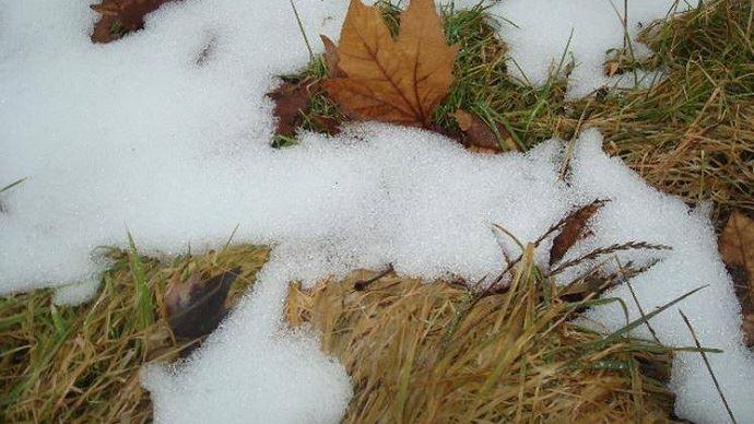 L'herbe trop haute avant l'hiver finit par faner et constituer un paillage néfaste au redémarrage de la prairie au printemps. (©Gnis)