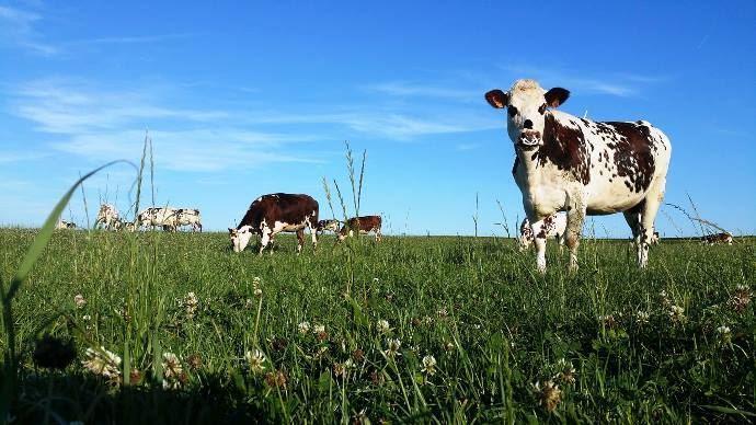 Dans l'enseignement général, les effets positifs de l'élevage sont rarement traités, comme par exemple sur le stockage du carbone ou l'entretien des paysages. (©TNC)