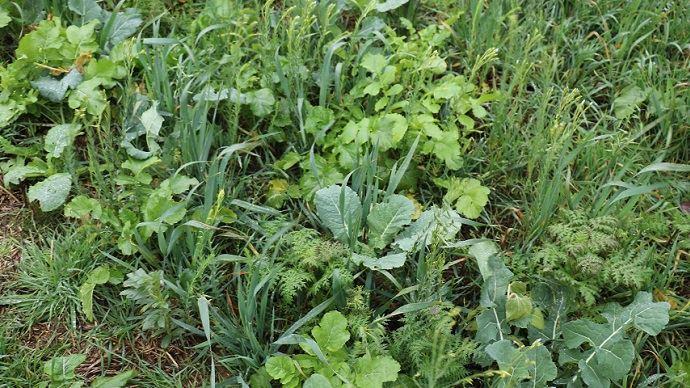 Les couverts végétaux représentent «la porte d'entrée vers l'agriculture de conservation des sols», selon Sarah Singla. (©TNC)