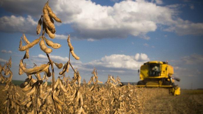 Aujourd'hui, 10% de la production de soja est produite sous la charte Soja de France, lancée il y a un an et qui engage les semenciers, producteurs, collecteurs et transformateurs. (©Adobe Stock)