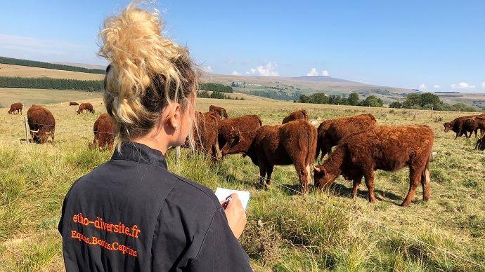 La vue, l'ouïe, le toucher, l'odorat et le goût: comment fonctionnent les 5 sens des bovins? Comment perçoivent-ils leur environnement? (©Pauline Garcia)