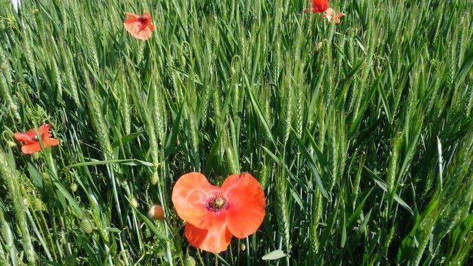La France se place en deuxième position des pays comptant le plus de producteurs biologiques dans le monde. (©TNC)