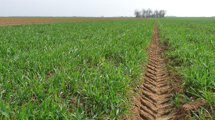 Rebond des cours du maïs, du blé et du soja ce vendredi 7 février à Chicago. (©TNC)