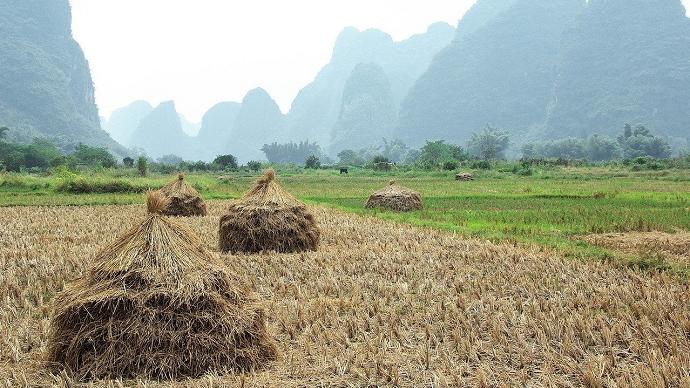 La Chine produit près de 20% de la production totale de céréales dans le monde. (©Pixabay)